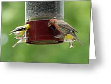 Finch 131 Greeting Card