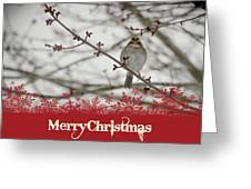 Finch Christmas Greeting Card