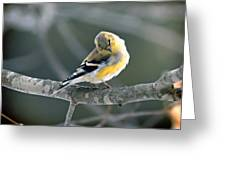 Finch Courtsy Greeting Card