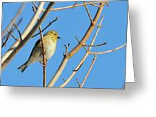 Finch Greeting Card