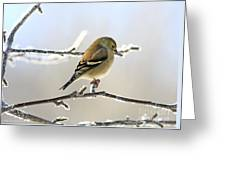 Finch On Frosty Perch Greeting Card