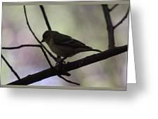 Finch Shadow 042814a Greeting Card