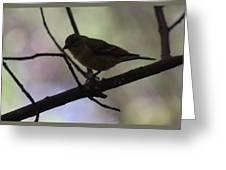 Finch Shadow 042814b Greeting Card
