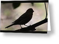 Finch Shadow 042814d Greeting Card