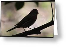 Finch Shadow 042814e Greeting Card