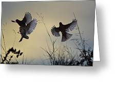 Finches Silhouette With Leaves 6 Greeting Card