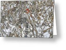 Find The Birds Greeting Card