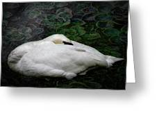Finding Rest In Nature Greeting Card