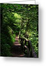 Finding The Right Path Greeting Card