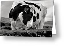 Fine Art Black And White-189 Greeting Card