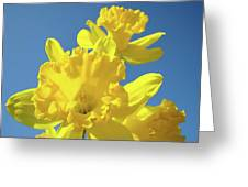 Fine Art Daffodils Floral Spring Flowers Art Prints Canvas Baslee Troutman Greeting Card