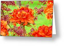 Fine Art Floral Art Prints Canvas Orange Rhodies Baslee Troutman Greeting Card