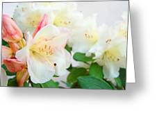 Fine Art Florals Prints White Pink Rhodies Rhododendrons Baslee Troutman Greeting Card