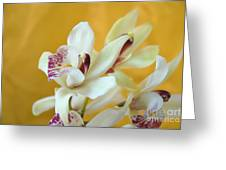 Fine Art- Orchid Greeting Card