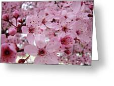 Fine Art Prints Spring Pink Blossoms Trees Canvas Baslee Troutman Greeting Card