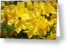 Fine Art Prints Yellow Rhodies Floral Garden Baslee Troutman Greeting Card