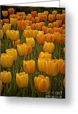 Fine Lines In Yellow Tulips Greeting Card