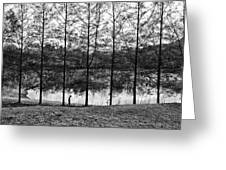 Fine Trees Greeting Card