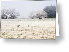 Fingal Winter Farmyard Greeting Card