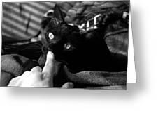 Finger Kiss Cat Greeting Card