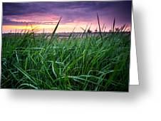Finn Line Grass Greeting Card