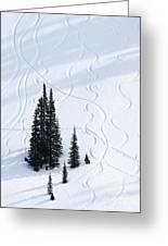 Fir And Snow Greeting Card
