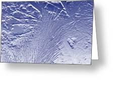 Fir In Blue Greeting Card