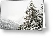 Fir Trees And Mountains Greeting Card