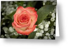 Fire And Ice Rose Greeting Card