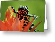 Fire-bellied Toad Greeting Card