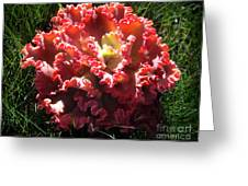Fire Color Succulent. Curly Plant, Exotic Greeting Card