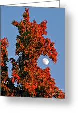 Fire Dragon Tree Eats Moon Greeting Card by CML Brown