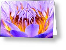 Fire In The Lily Greeting Card