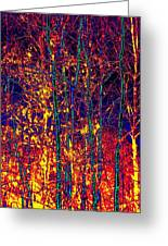 Fire In The Trees Greeting Card