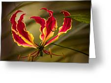 Fire Lily Greeting Card