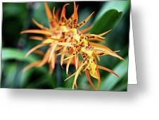 Fire Orchid Greeting Card