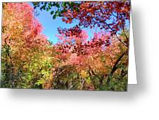 Fire Top Trees Greeting Card