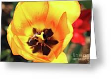 Fire Tulip Greeting Card
