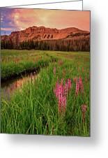 Elephants Head Wildflowers With Hayden Peak, Uinta's Greeting Card