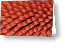 Firecracker Greeting Card