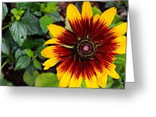 Firecracker Sunflower Greeting Card