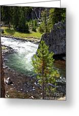 Firehole Fin Greeting Card
