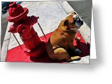 Fireplug Bulldog Greeting Card