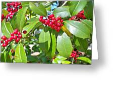 Firethorn Tree Greeting Card