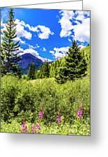 Fireweed, Deer Park Creek, Grand Turk Mountain Greeting Card