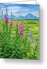 Fireweed In The Foreground Greeting Card
