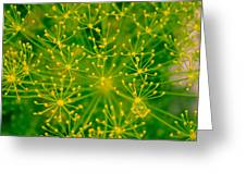 Fireworks Of Dill Flowers Greeting Card