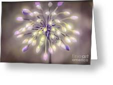 Fireworks  Wildflowers Greeting Card