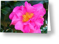 Firey Pink Camelia Greeting Card