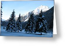 Firs In The Snow Greeting Card